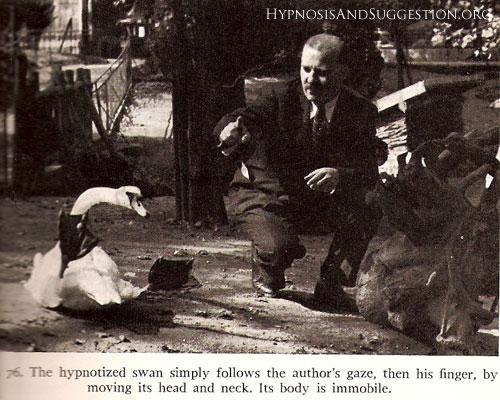 Гипноз кошек и животных.